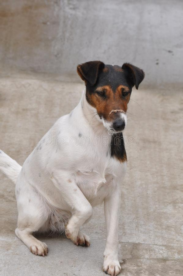 Dog with dust on muzzle stock photo