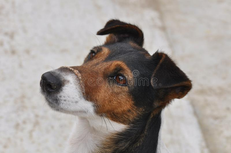 Dog with dust on muzzle royalty free stock images