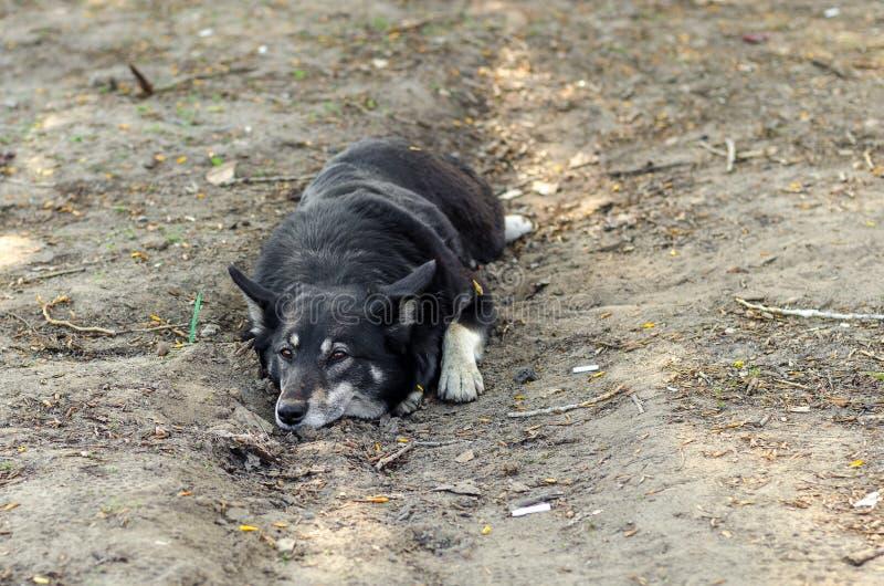 dog earth lies arkivbilder