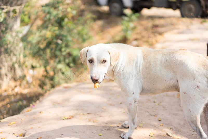 Dog eating dry food at the garden royalty free stock image