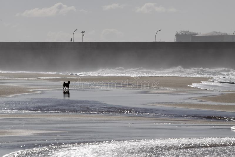 Dog in an empty beach. Dog in an empty sea beach stock images