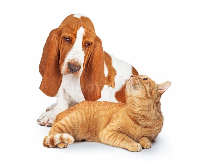 Dog en kat samen, die naar elkaar kijken stock fotografie