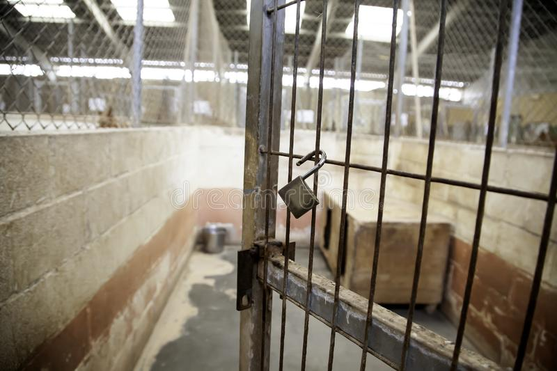 Dog in kennel stock images