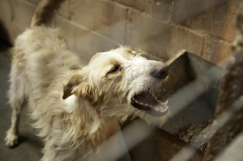 Dog in kennel royalty free stock photo