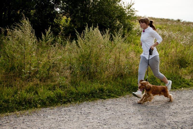 Dog exercise stock photos