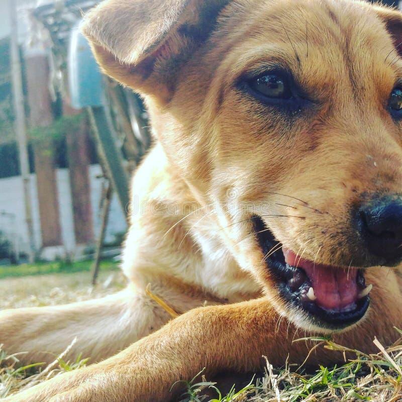 Dog& x27; expresiones de s imagen de archivo