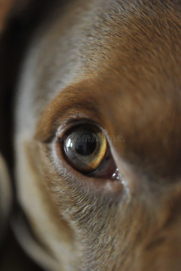 dog eye stock photos