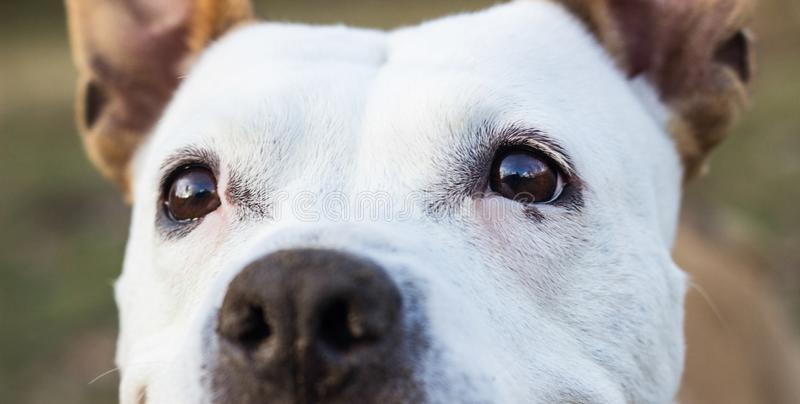 Dog eyes looking at you stock photo