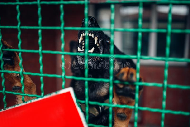 Dog face behind bars, veterinary clinic, no people. Dog face behind bars in veterinary clinic, no people. Vet hospital, professional treatment of domestic royalty free stock image
