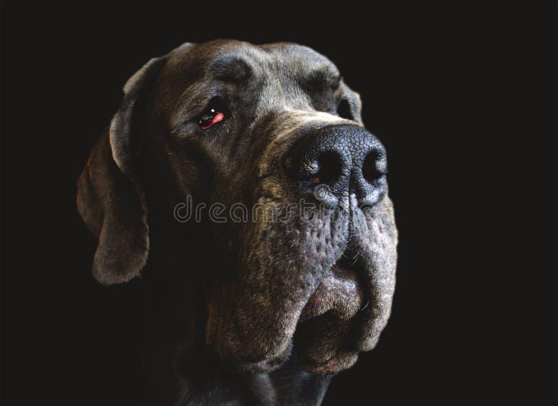 Dog face close up stock image