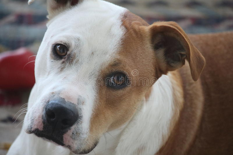 Dog face closeup stock photo