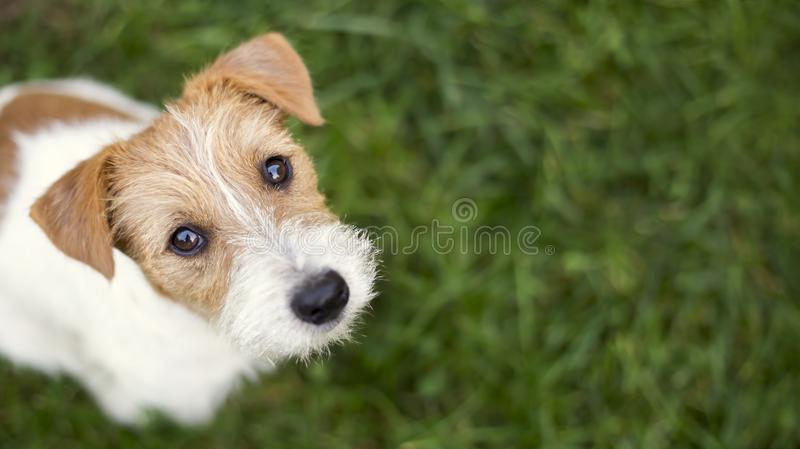 Dog face - cute happy pet puppy looking in the grass royalty free stock photography