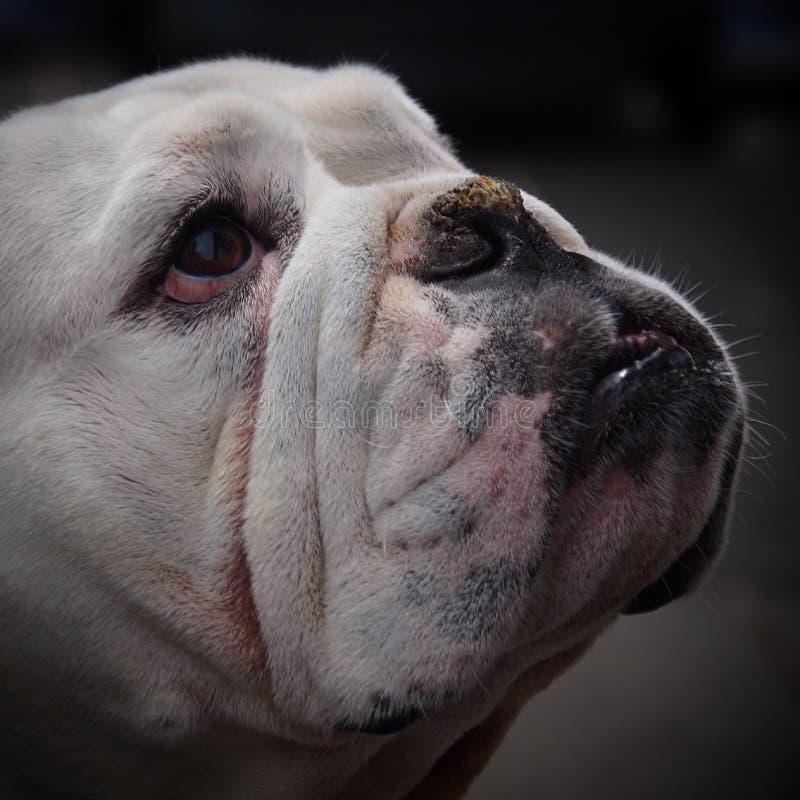 Dog, Face, Dog Like Mammal, Dog Breed Free Public Domain Cc0 Image