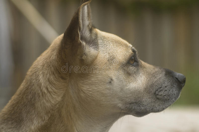 Download Dog stock image. Image of warm, attractive, family, hair - 32532749