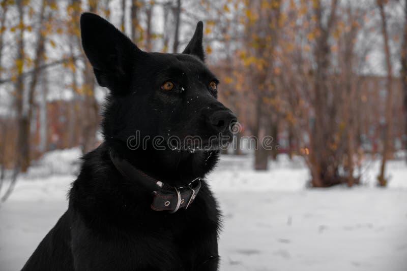 Dog fashion model stock photography
