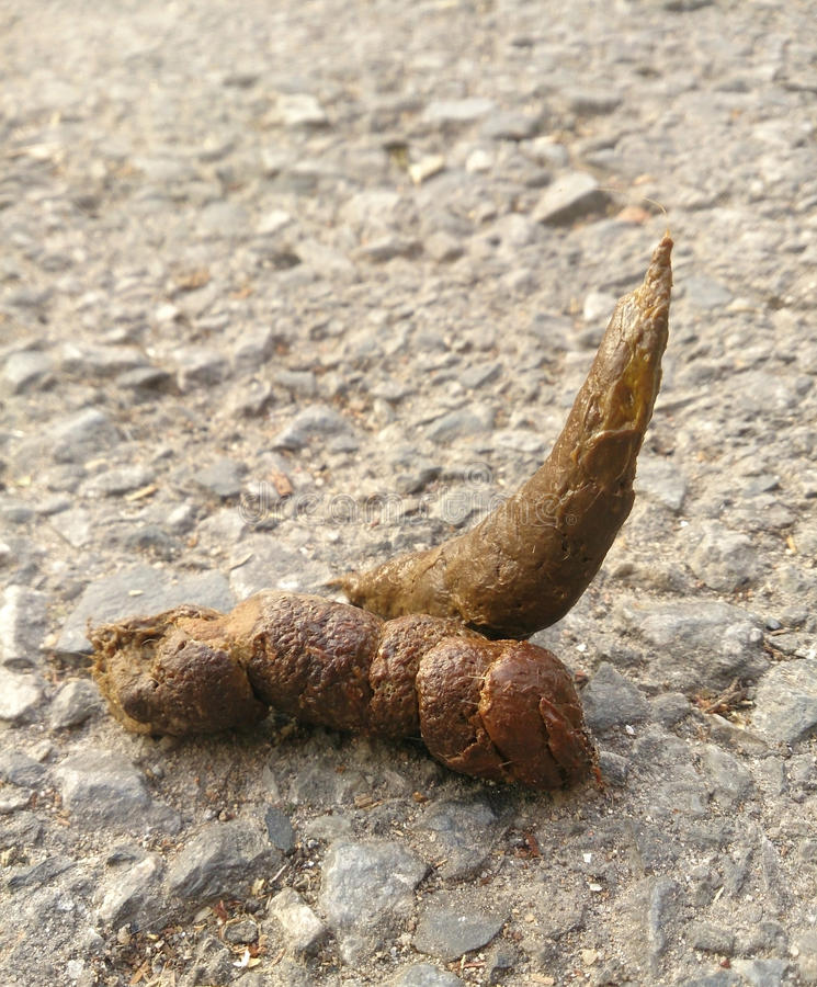 Dog Feces Stock Photo. Image Of Brown, Dirty, Excrement