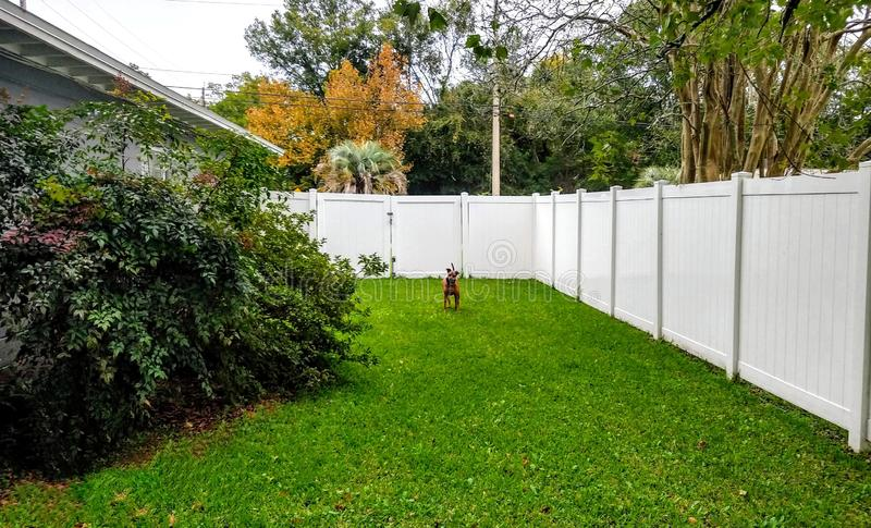 Dog fence yard play fun green Florida trees what look cute fun royalty free stock images