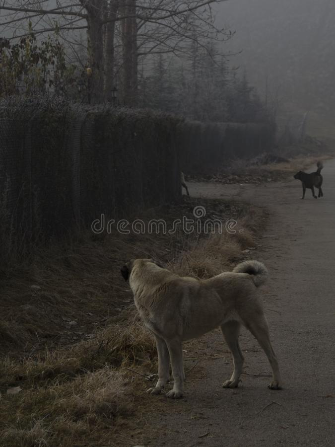 Dog and fences. At ankara eymir lake royalty free stock photography