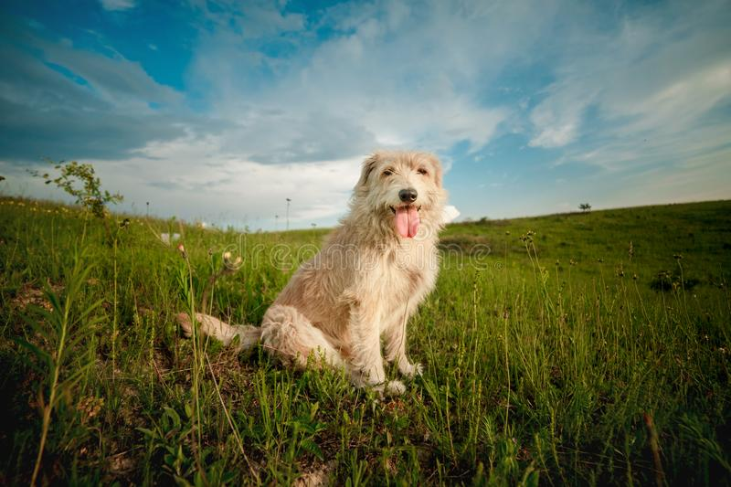 Dog in the field stock photo