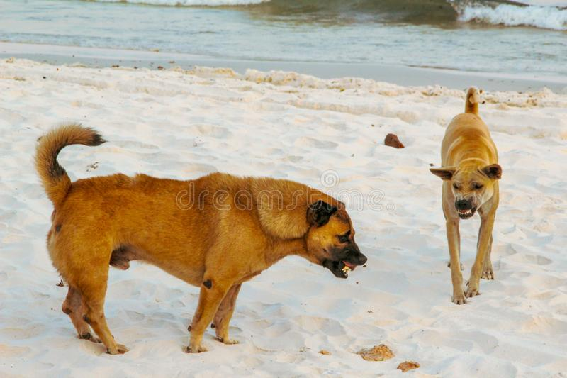 Dog fighting in the beach stock photos