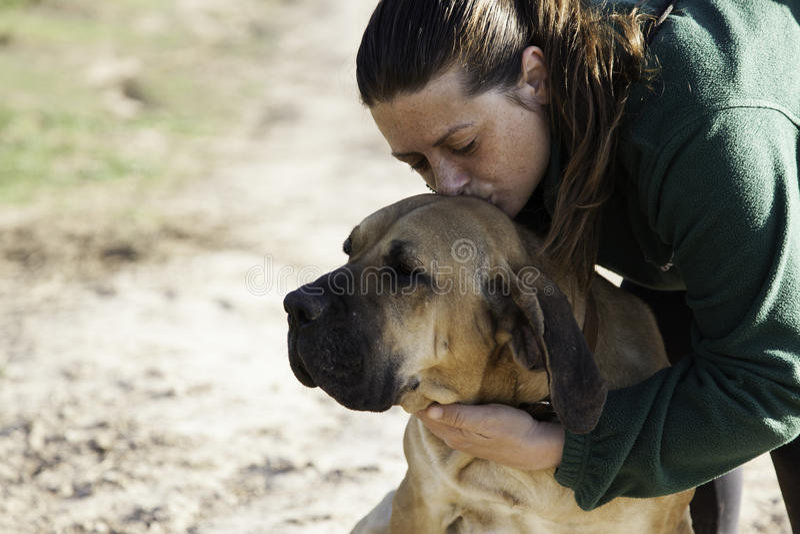 Dog fila brasileiro. Dog guardian of company royalty free stock images