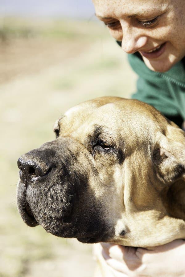 Dog fila brasileiro royalty free stock image