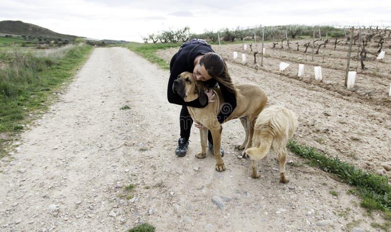 Dog fila brasileiro stock image