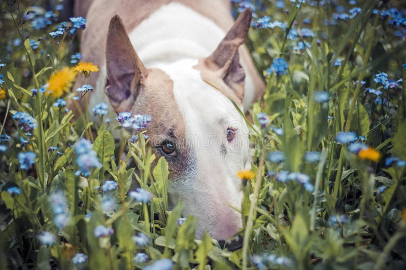 Dog,Flowers, sad. The dog is sad in flowers royalty free stock photos