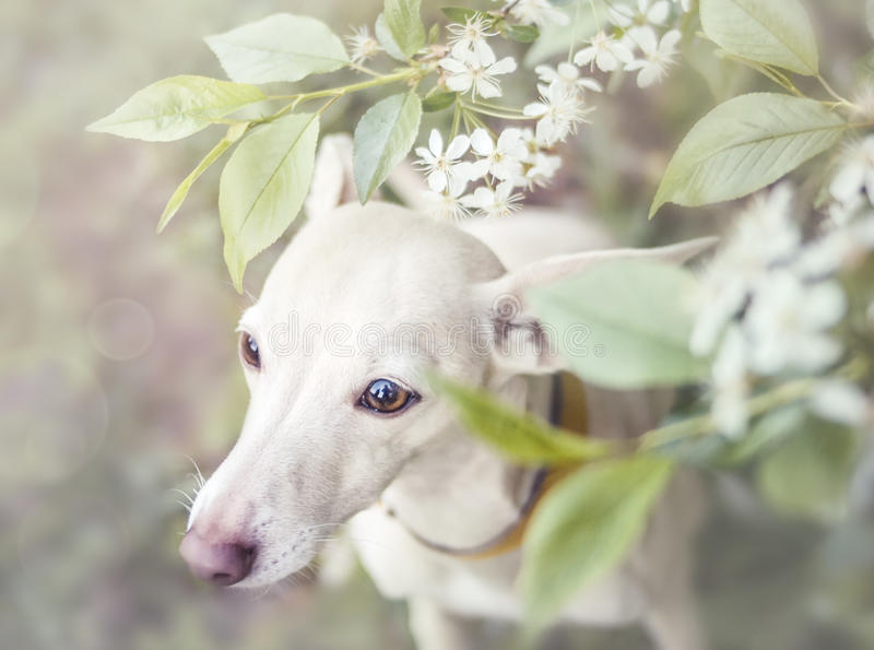 Dog,Flowers, sad. The dog is sad in flowers stock photography