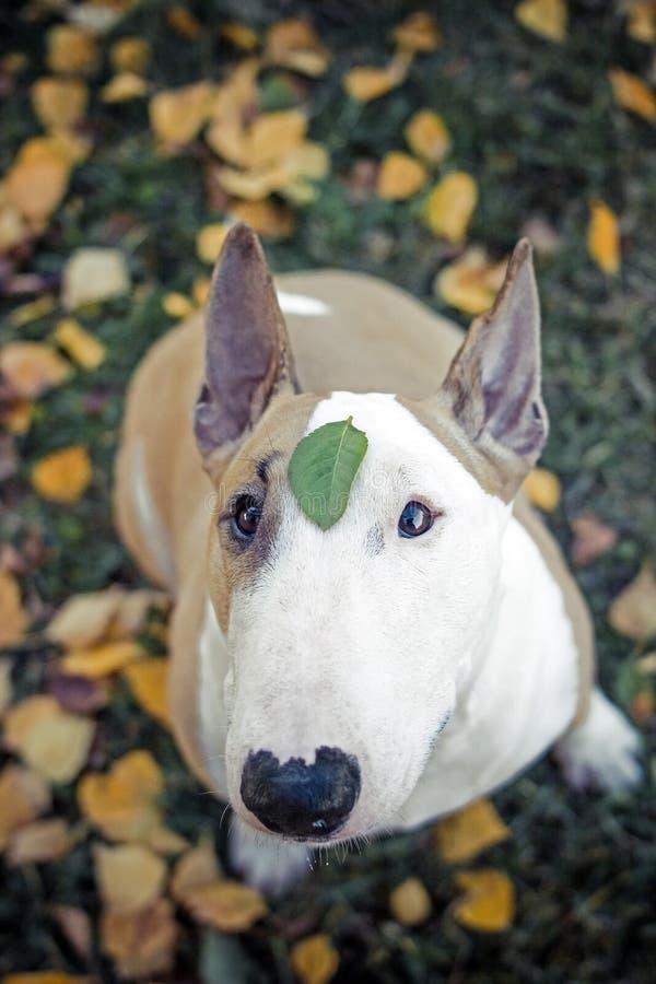 Dog, Flowers, sad royalty free stock image