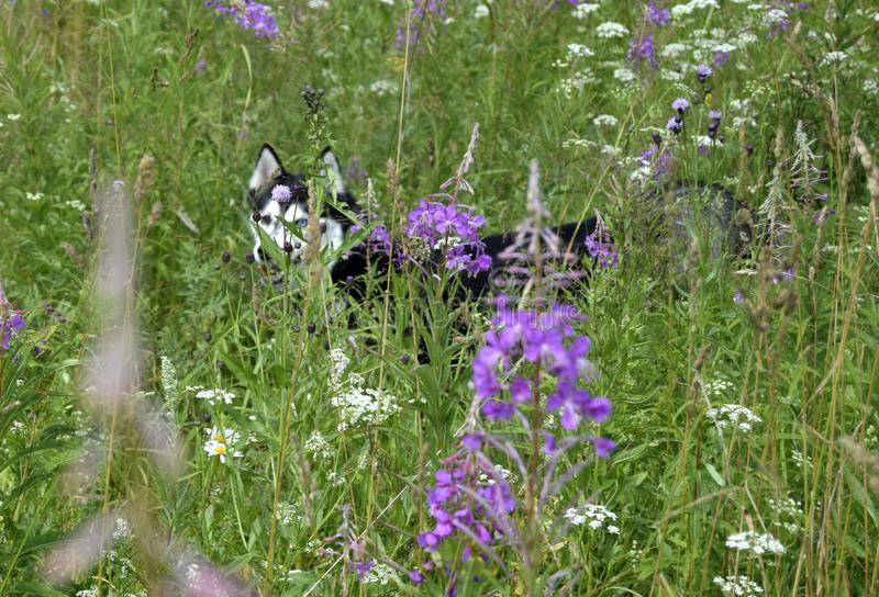 Dog into the flowers royalty free stock photography