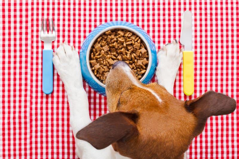 Dog food bowl royalty free stock photos