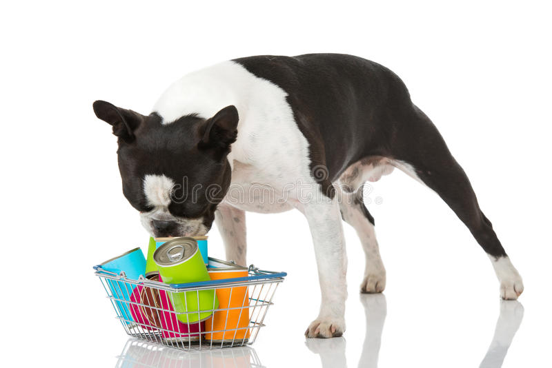 Dog with food. Dog with pet food isolated on white royalty free stock images