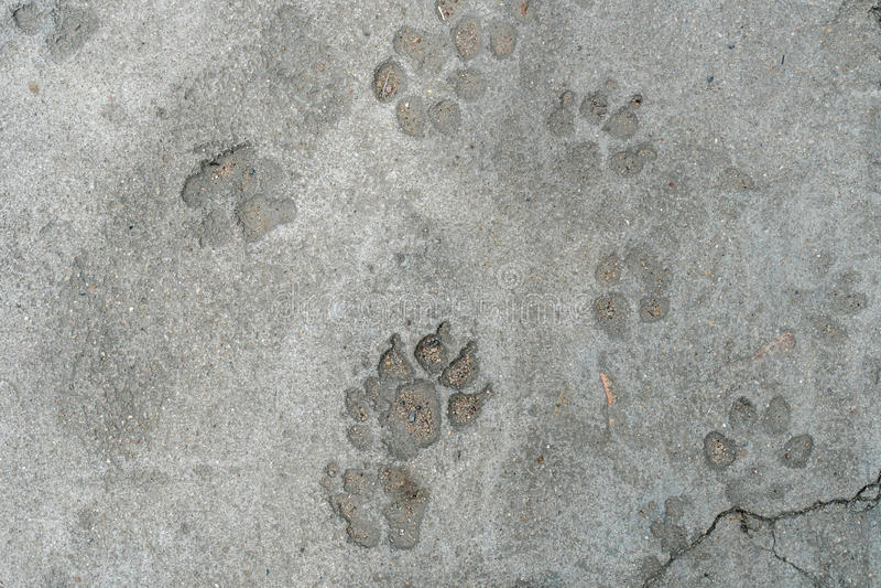 Dog foot print royalty free stock photos
