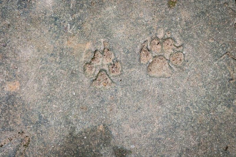 Dog foot print royalty free stock photography