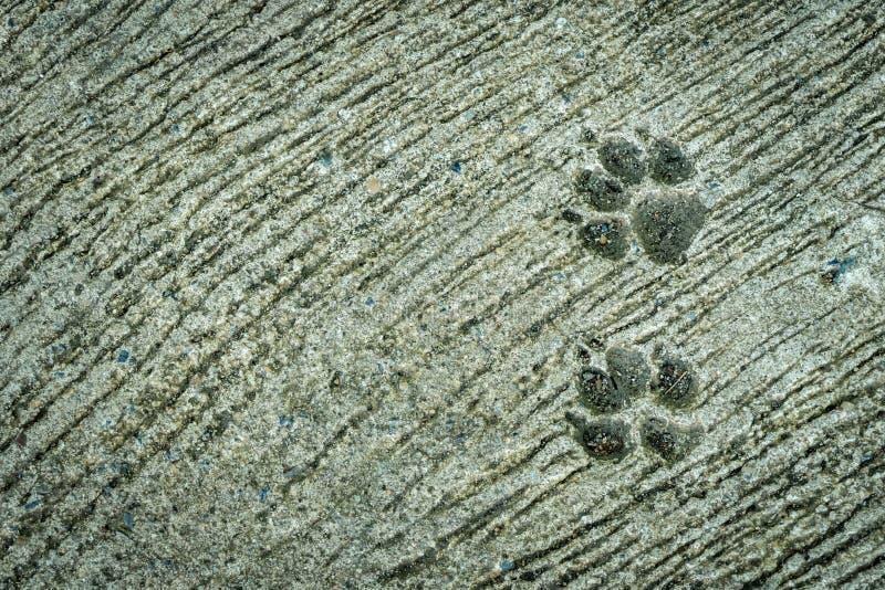 Dog foot print royalty free stock image