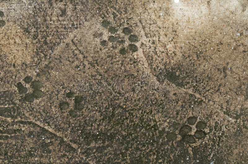 Dog foot print stock photo