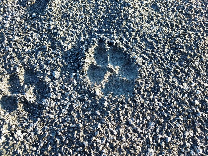 Dog foot print in grey gravel or rock surface stock photos