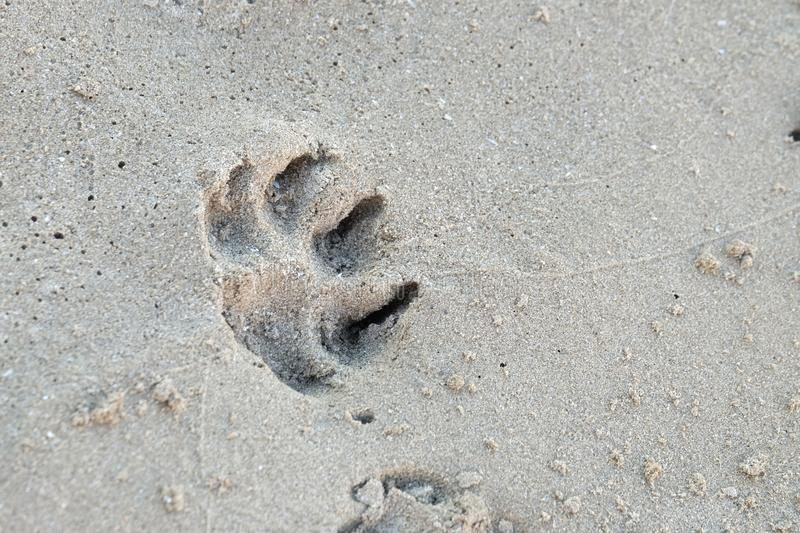 A dog footprint on sand beach with wet ground for background backdrop. Dog footprint sand beach wet ground background backdrop alone animal pet clean coast day royalty free stock images