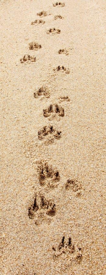 Free Dog Footprints On The Beach Royalty Free Stock Photo - 32254395