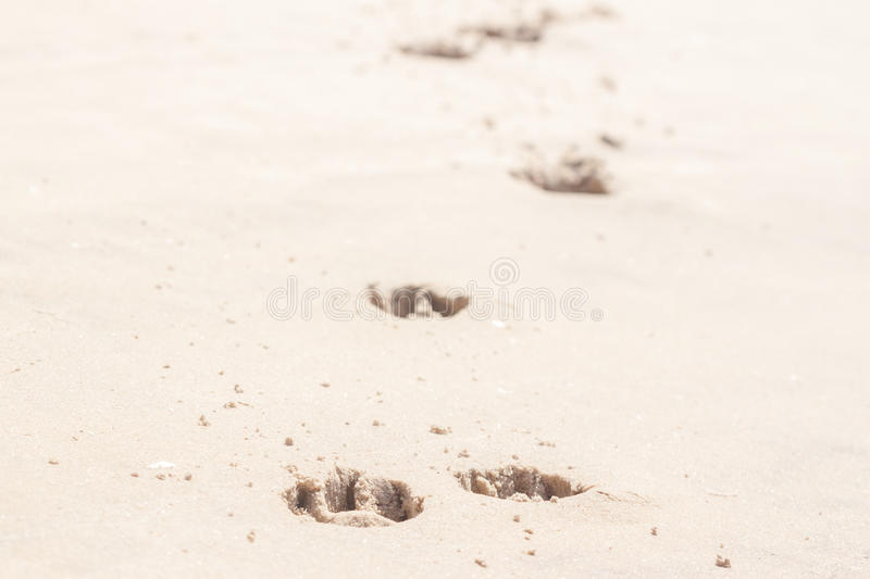 Dog footprints in the sand. Can be background stock photo