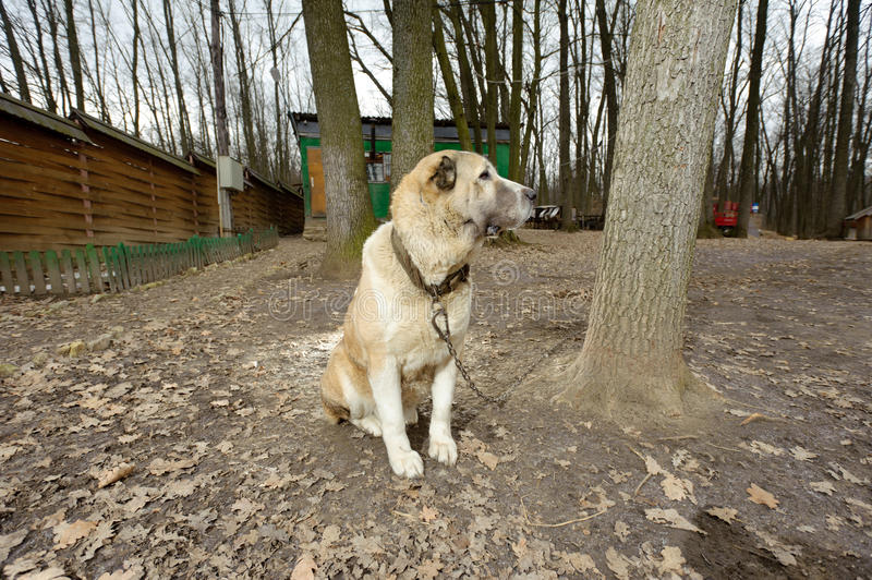 Download Dog in Forest stock photo. Image of observe, beauty, feline - 30498170