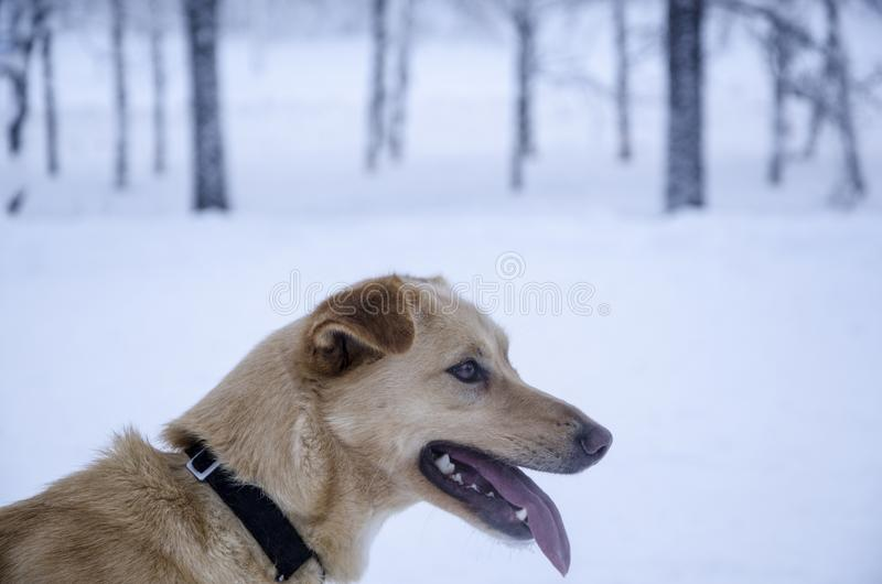 Dog in the forest stock photography