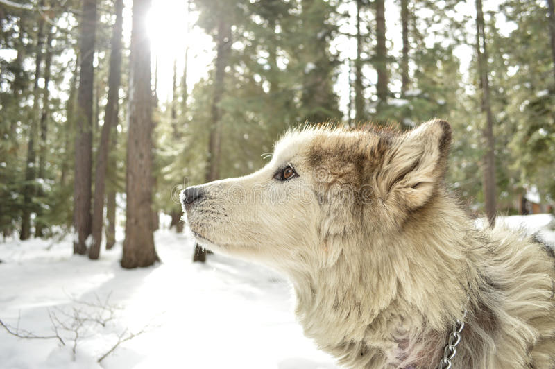 Dog In Forest In Winter Free Public Domain Cc0 Image