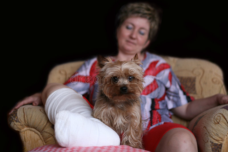 Dog Friend. A small dog is sitting beside his friend with broken leg stock photos