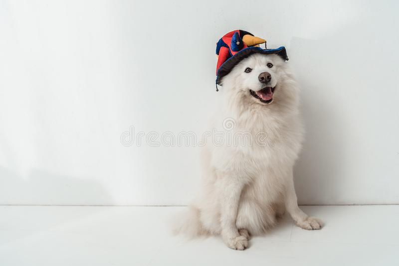 Dog in funny hat stock photography