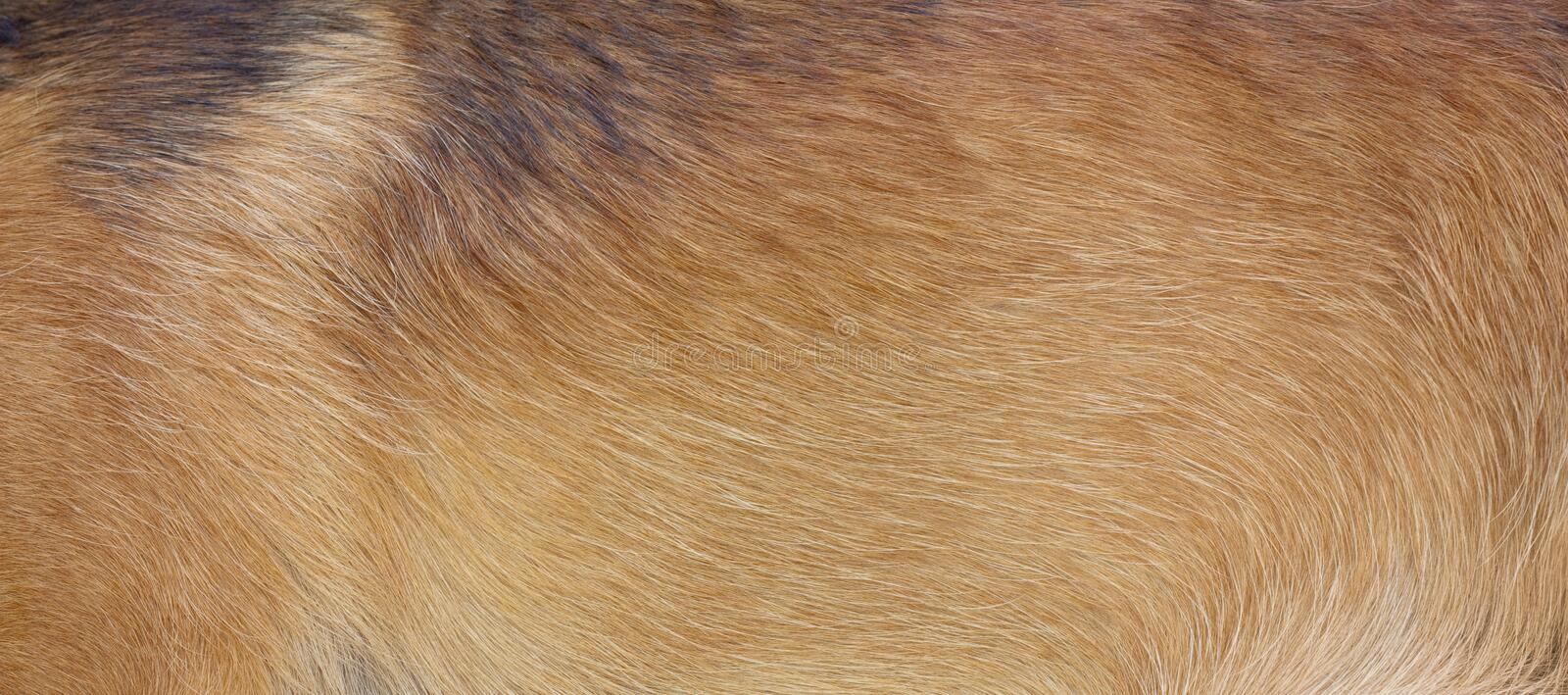 Download Dog Fur Royalty Free Stock Photo - Image: 15954385