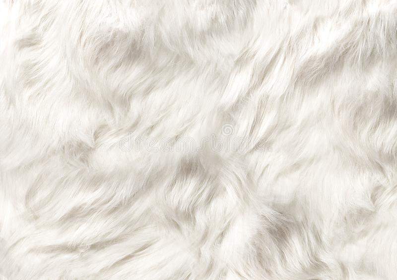 DOG FUR, HAIR, SMOOTH SILKY HAIR OF DOG royalty free stock images