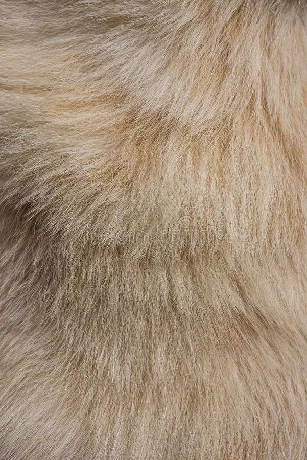 Dog fur texture. For background stock photo