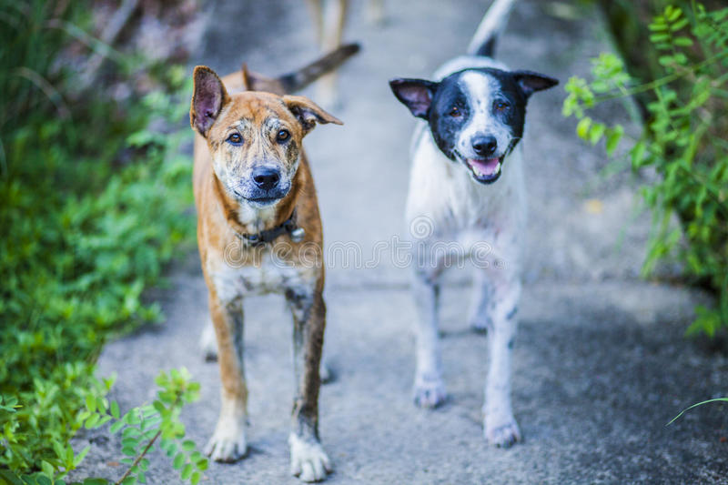 Dog gang royalty free stock photo